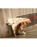 Repelentes para evitar las manchas y olores de orines en fachadas, muros o aceras